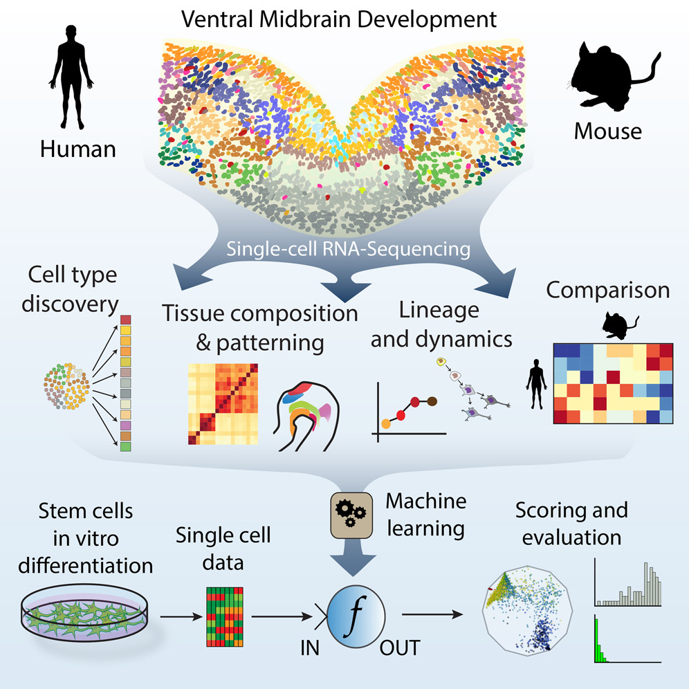 karolinska stem cell